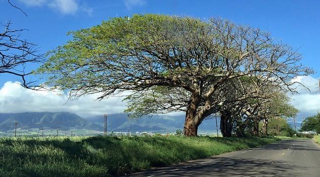 omaopio road trees
