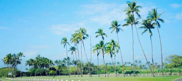 baldwin beach park palm trees