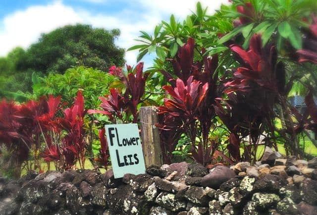flower leis sign on rock wall