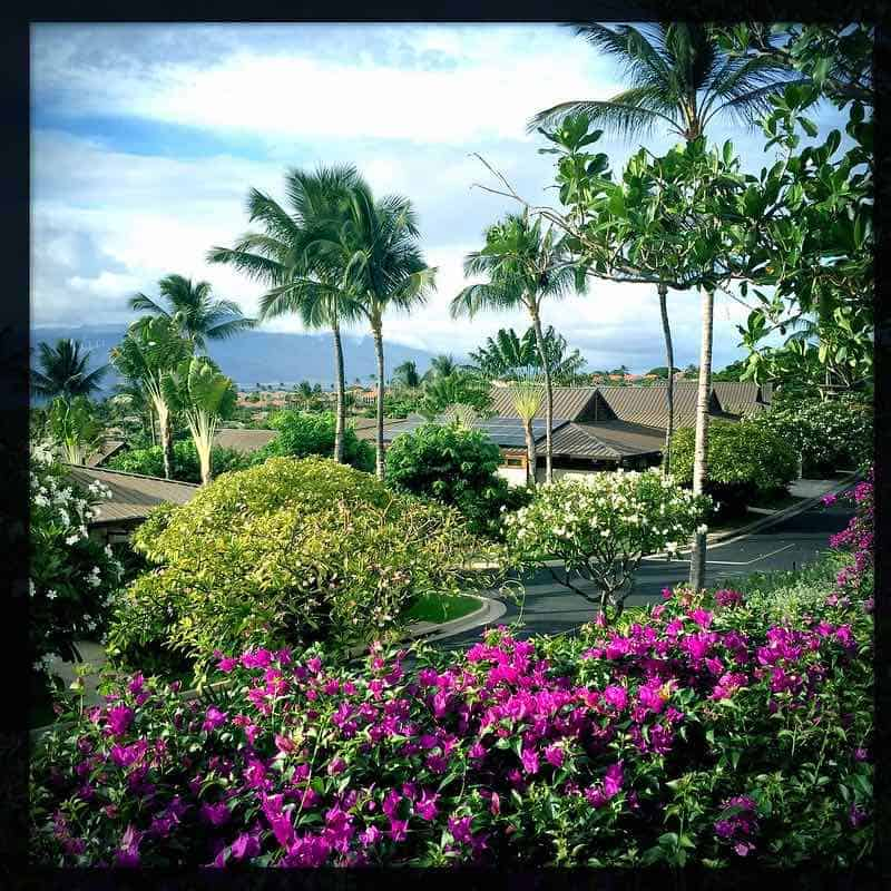 Papali condo homes Maui