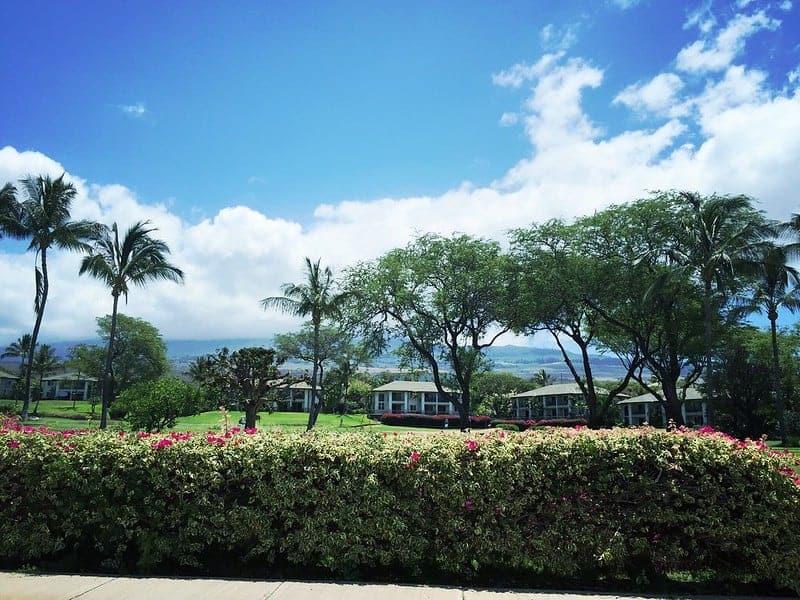driving on Wailea Alanui Maui