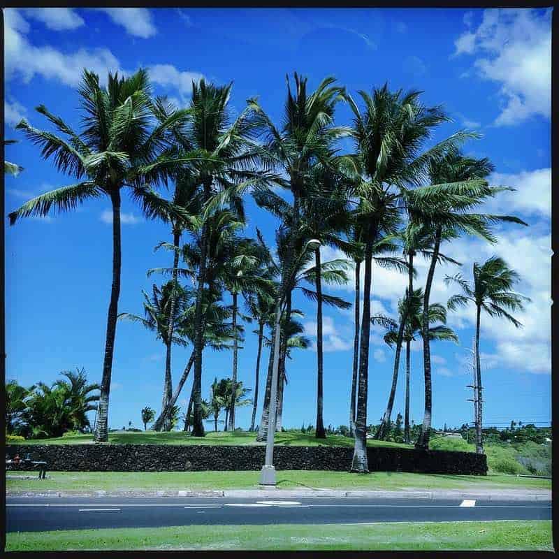 wailea gateway palms
