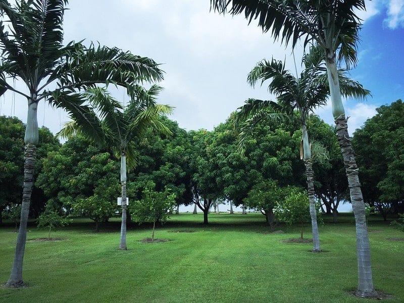 Olowalu oceachfront orchard